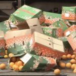 【画像検証】京急事故トラックの中はみかん(オレンジ)かレモンどっち?